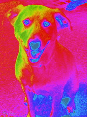 Blue Healer Photograph - Imaginary Liberty The Dog by Amy Hosp