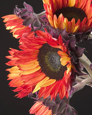 Photograph - Imagination - Sunflower 01 by Randy Grosse