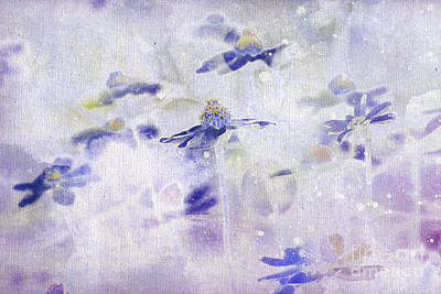 Daisy Painting - Imagine - M11v10 by Variance Collections