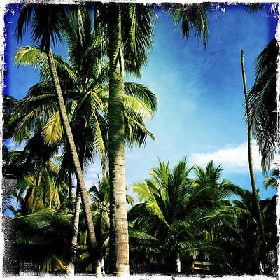 Haleiwa Photograph - Palm Grove by Stacy Vosberg