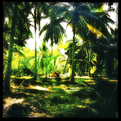 Haleiwa Photograph - Grove Of Coco Palms by Stacy Vosberg