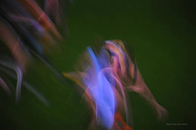 Photograph - Img 6079 Tnm by Mark Van den dries
