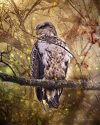 Print featuring the digital art Immature Bald Eagle In Solitude by J Larry Walker