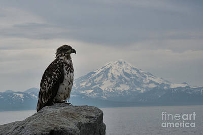 Photograph - Immature Eagle And Alaskan Mountain by David Arment