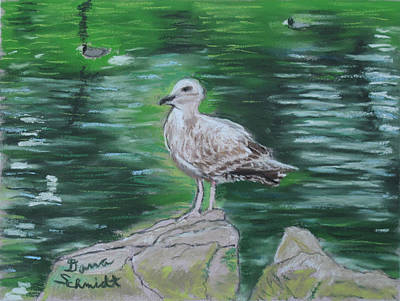 Painting - Immature Seagull Golden Gate Park San Francisco Ca by Dana Schmidt