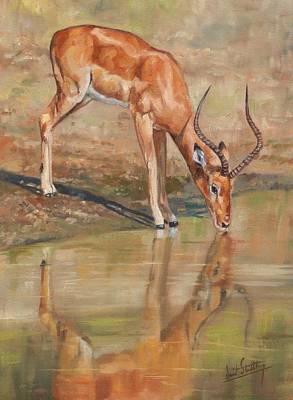 Deer Oil Painting - Impala by David Stribbling