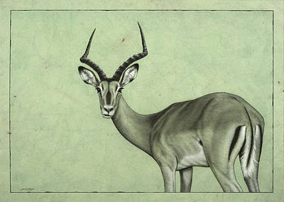 African Animals Drawing - Impala by James W Johnson