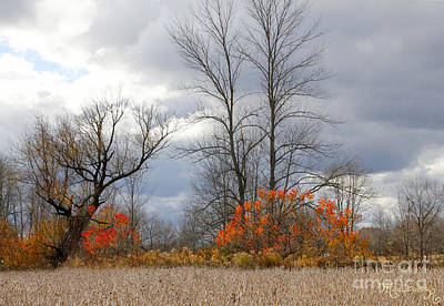 Photograph - Impending Winter by Mariarosa Rockefeller