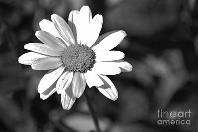 Photograph - Imperfect Beauty by Barbara Bardzik