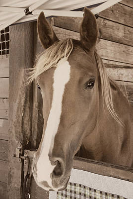 Photograph - Imperial Pose - Sepia by Marilyn Wilson