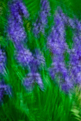 Photograph - Impression Of Siberian Irises by  Onyonet  Photo Studios