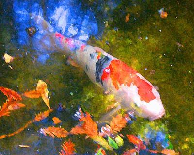 Impressionism  Koi 2 Art Print by Amy Vangsgard