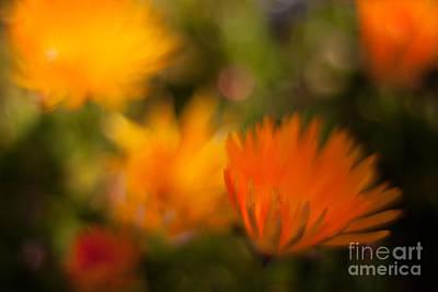 Gerbera Daisy Photograph - Impressionist Gerbera by Mike Reid