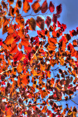 Photograph - Impressions Of Autumn by Heidi Smith