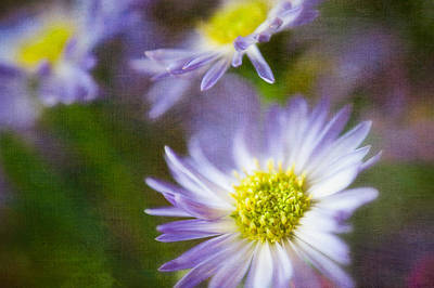 Photograph - Impressions Of Spring by Joan Herwig