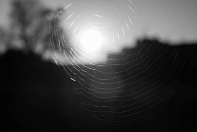 Web Of Life Photograph - The Veins Of Life  by Ritu  Kaushal