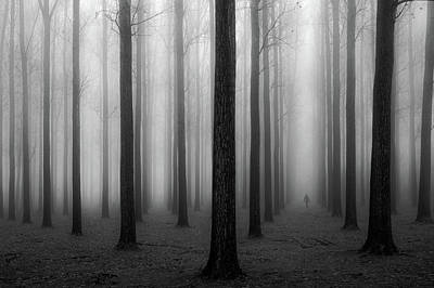 Forest Walk Photograph - In A Fog by Jochen Bongaerts