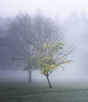 Photograph - In A Fog by Kim Swanson