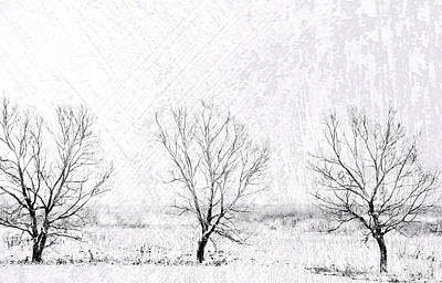 In A Line. Winter Trees Art Print by Jenny Rainbow