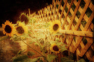 Sunflowers And Lattice Art Print by Toni Hopper