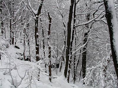 In A Winter Wonderland Art Print by Bill Cannon