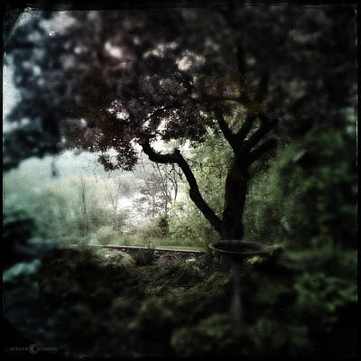 Photograph - In And Out Of The Garden by Tim Nyberg