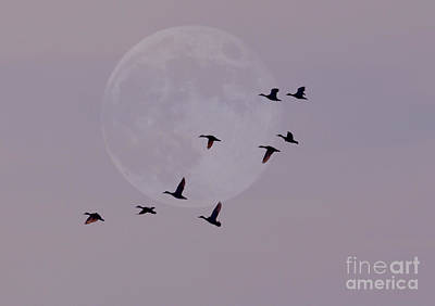 Photograph - In Competition With The Moon by Kathy Baccari
