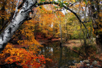 Art Print featuring the photograph In Dreams Of Autumn by Kay Novy