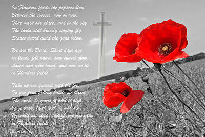Photograph - In Flanders Fields by Gill Billington