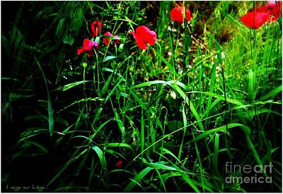 Photograph - In Flanders Fields by Mariana Costa Weldon