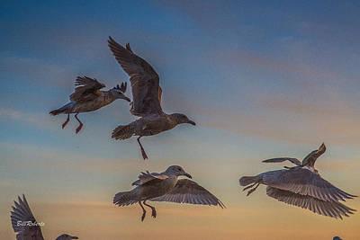 Moss Landing Photograph - In Flight by Bill Roberts