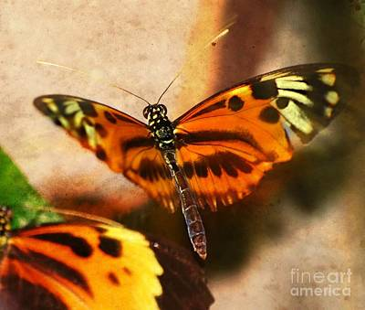 Photograph - In Flight Butterfly  by Peggy Franz