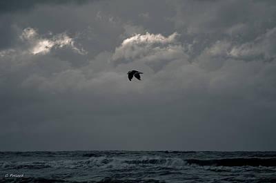 Beachglass Photograph - In Flight by Christy Pollard