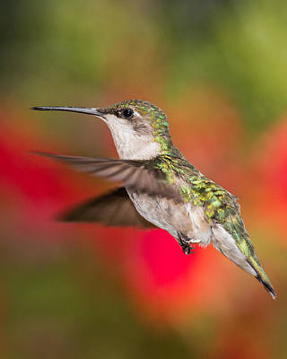 Photograph - In Flight by Dale Kincaid