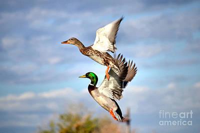 Flock Of Bird Photograph - In-flight by Deb Halloran