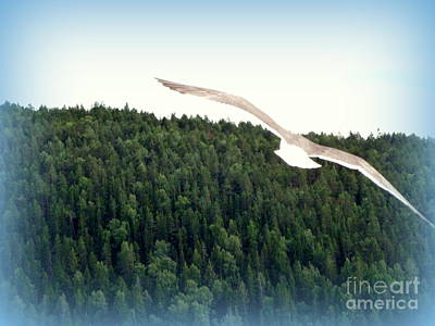 Photograph - In Flight by John Potts