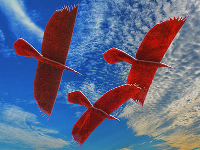 Photograph - In Flight by Paul Wear