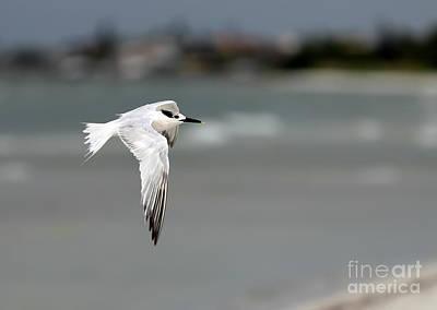 Photograph - In Flight by Rick Kuperberg Sr
