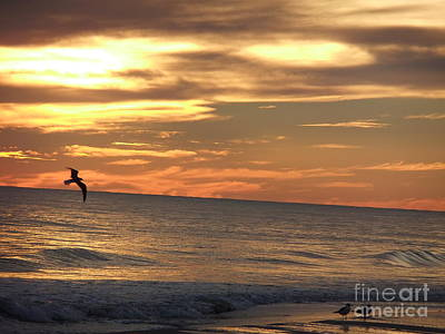 Photograph - In Flight To See The Sunset by Deborah DeLaBarre