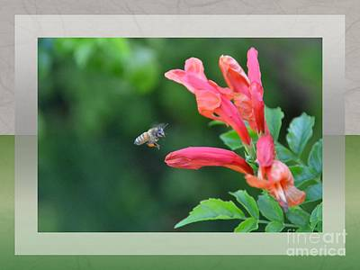 Photograph - In For The Landing- Honeysuckle by Darla Wood