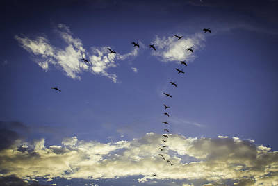 Photograph - In Formation by Dave Hall