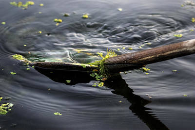 Photograph - In Harmony With Nature by Rohit Chawla