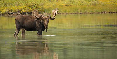 Willow Lake Photograph - In His Prime by Sandy Sisti