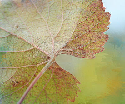 Grapevine Photograph - In Honor Of Autumn by Fraida Gutovich