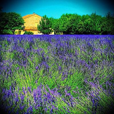 Lavender Wall Art - Photograph - Provence Lavender by Beth Young