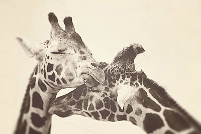 Giraffe Wall Art - Photograph - In Love by Carrie Ann Grippo-Pike