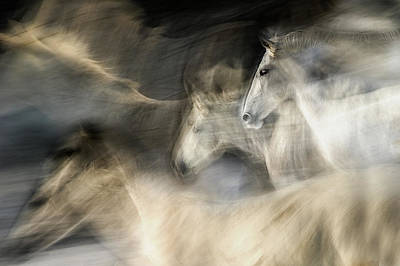 White Horse Wall Art - Photograph - In Motion by Milan Malovrh