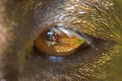 Photograph - In My Dog's Eyes I'm Everything by Peggy Collins