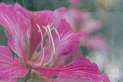 Photograph - In My Garden by Sharon Mau