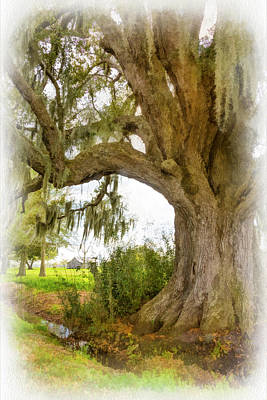 In Praise Of Live Oaks 2...paint Art Print by Steve Harrington